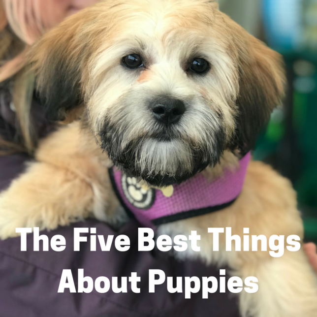 Five Best Things About Puppies