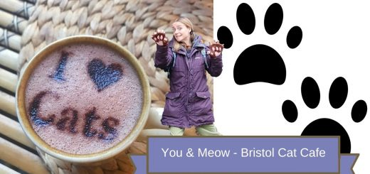 you & Meow Bristol cat cafe